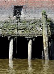 Kaimauer bei Ebbe im Hamburger Hafen; eingelassener Eisenpoller / Eisenring und verwitterter Streichdalben, mit Gräsern bewachsen. Bei Niedrigwasser zeigen sich die Eichenstämme, die das Fundament der Kaianlage bilden.