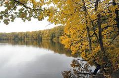 Herbstbäume / Herbstlaub am Grossen Bramfelder See