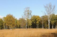 Wiese mit Birken - Herbstbäume am Waldesrand - Duvenstedter Brook.
