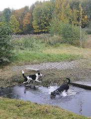Muehlenau Bach - Eidelstedter Feldmarkt - Hunde im Wasser.