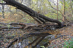 Hambuger Flüsse - Lauf der Saselbek am Pastorenstieg.