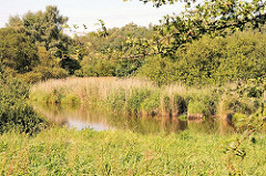 Ausläufer des Sees im Naturschutzgebiet  - das Ufer ist mit Schilf, Sträuchern und Bäumen bewachsen.