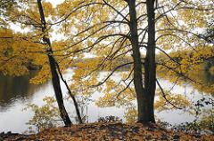 Bilder vom Hamburger Herbst - gelbes Herbstlaub am See in Hamburg Bramfeld