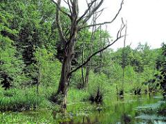 Alsterufer an der Mellinburger Schleuse in Hamburg Ohlstedt-Wohldorf; abgestorbener Baum.