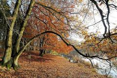 Laub am Ufer des Allhorndiek Teichs - Herbstbäume.