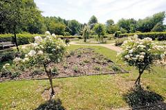 Rosengarten Harburger Stadtpark; blühende Rosen.