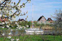 Kirschblüte im Alten Land - Sportboot auf der Este bei HH-Cranz.