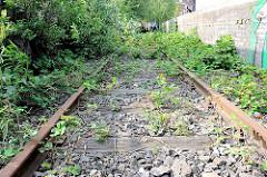 Alte, mit Wildkraut und Bäumen überwachsenes Gleis der Hafenbahn an einer Laderampe im Hamburger Hafengebiet.