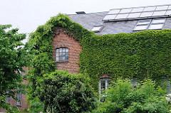Mit Efeu und Kletterpflanzen bewachsene Fassade des Klinkergebäudes der Maschinen-, Tüten- und Couvertfabrik N.F.A. Netzler in Hamburg Ottensen.