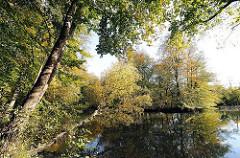 Herbstbäume am Rodenbeker Teich in Hamburg Bergstedt