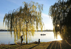 Tiefstehende Herbstsonne am Ufer der Alster in Hamburg Uhlenhorst - Bezirk HH-Nord. Weiden stehen am Ufer des Sees.