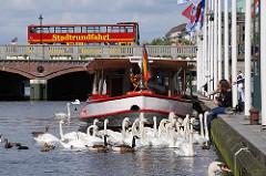 Schwäne bei den Alstertreppen - ein roter Doppeldecker-Bus der Stadtrundfahrt fährt auf der Reesendammbrücke.