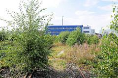 Wildwuchs zwischen Gleisen - stillgelegte Schienen in der Hafencity Hamburg.