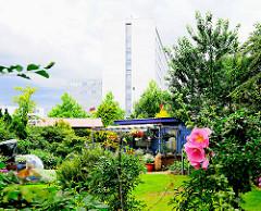Schreibergarten Hamburg Lokstedt - Blüten von Stockrosen - Hochhäuser im Hintergrund.