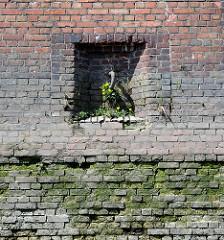 Alte Kaimauer im Hamburger Hafen; eingelassener Eisenring zum Vertäuen von Schiffen. Blühender Löwenzahn in der Mauerritze.