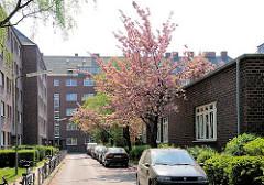 Wohnstrasse in Hamburg Altona Nord - blühende Kirschbäume, parkende Autos beim Wohnblock Koldingstrasse.