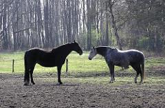 Ländliche Idylle im Stadtteil Langenhorn - Pferde auf einer Koppel an der Tangstedter Landstrasse