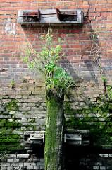Verrostete Halterung eines abgebrochenen Holzdalbens im Hamburger Hafen; der bemooste alte Baumstamm ist mit Gras und jungen Bäumen bewachsen.