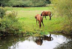 Grasende Pferde auf einer Weide am Flusslauf der Alster im Hamburger Stadtteil Bergstedt / Bezirk Wandsbek.