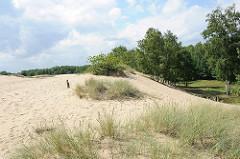 Naturschutzgebiet Boberger Niederung, Hamburg Lohbrügge - Strandhafer wächst am Rand der grossen Boberger Düne.