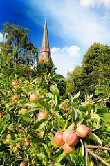 Apfelbaum mit Äpfeln - von einem Brautpaar als Baum der Hoffnung bei der Kirche St. Gertrud von Hamburg Altenwerder gepflanzt.