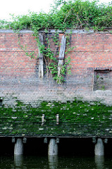 Alte verwitterter Holzdalben / Streichdalben an einer Kaimauer im Hamburger Hafen - die unteren Teile sind weggebrochen. Bei Ebbe sind die sind die Eichenstämme, die das Fundament der Kaianlage bilden zu sehen.