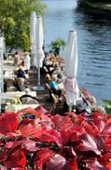 Herbstlich gefärbter Wein auf der Brücke Hudwalckerstr. in Hamburg Winterhude - Cafe am Leinpfad - Lauf der Alster.