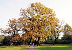 Herbstbäume im Eichenpark - Herbstsonne in den alten Eichen des Parks an der Alster.
