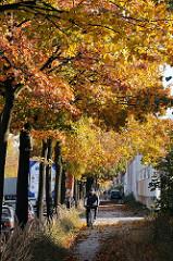 Prächtiges Herbstlaub Ahornbäume in der Berzeliusstrasse.