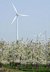 Windräder - Energiegewinnung durch Windkraft - blühende Obstäume - Bilder aus Hamburg Francop.