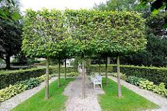 Quadratisch beschnittene Bäume im Rosengarten an der Elbchaussee in Hamburg Ottensen - eine Buchenhecke umfasst die Grünanlage, eine Holzbank steht unter den Bäumen.
