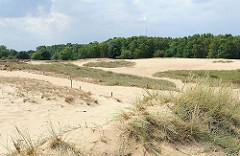 Dünenlandschaft in der Boberger Niederung - der Sand wird von Strandhafer gehalten - im Hintergrund Bäume der Boberger Niederung im Hamburger Stadtteil Lohbrügge im Bezirk Hamburg Bergedorf.