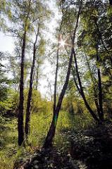 Bilder von Naherholungsmöglichkeiten und Grünanlagen in der Hansestadt Hamburg - Fotos aus dem Naturschutzgebiet Höltingbaum, Stellmoorer Tunneltal.