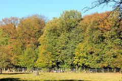 Herbsttag mit Sonne in Hamburg Niendorf; am Rande des Damwildgeheges stehen die hohen Bäume in unterschiedlichen Herbstfarben - blauer Himmel.