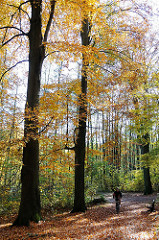 Spaziergang in der Sonne - Herbstlaub auf dem Alsterwanderweg - -Spaziergänger.