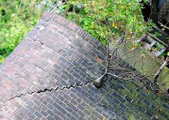 Brückenpfeiler aus Ziegel gemauert im Billbrookkanal in Hamburg Billbrook - ein Bäumchen wächst aus der Mauer und verursacht einen Riss im Mauerwerk.