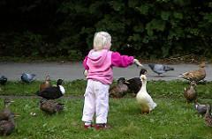 Enten auf der Wiese des Eimsbüttler Parks am Weiher - ein Kind füttert die Wasservögel - Bilder Hamburger Stadtteile und Grünanlagen.