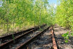 Stillgelegte Eisenbahngleise in Hamburg Wilhelmsburg - junge Birken überwuchern die Gleisanlage.