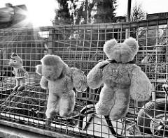 Fundstücke am Gitter eines Gartenanhängers; Plüschbären und Bertfigur / Gegenlichtaufnahme, schwarz-weiss.