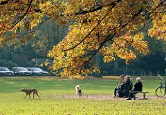 Herbst an der Alster - Eiche mit herbstlich gefärbten Blättern - Hundewiese in Hamburg Rotherbaum.