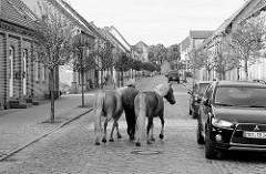 Wohnhäuser in der Töpferstrasse von Mirow; Kopfsteinplaster - moderne Autos, zwei Pferde werden am Halfter geführt.