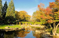 Herbst in der Hamburger Grünanlagen Planten un Blomen - Japanischer Garten, Zierahorn mit roten Herbstblättern.