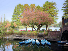 Bootsverleih auf der Liebesinsel im Hamburger Stadtparksee in Winterhude - Kanus liegen am Steg - Zierkirsche im herbstlichen Rot.