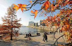 Herbst in der Hansestadt Hamburg - Herbstbäume an den Marco-Polo-Terrassen in der Hamburger Hafencity am Grasbrookhafen. Im Hintergrund die Baustelle der Elbphilharmonie.