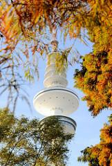 Herbstlich gefärbte Sumpfzypressen in Planten un Blomen - Fernsehturm / Heinrich Hertz Turm in Hamburg.