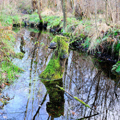 Entwässerungsgraben im Himmelmoor - Bilder aus der Stadt Quickborn.