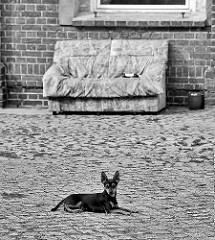 Wachhund auf Pflastersteinen; Sofa im Hof - Bilder aus Rathenow an der Havel.
