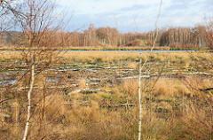 Himmelmoor in Quickborn - auf der 605 Hektar grossen Hochmoorfläche wird teilweise noch Torf abgebaut - auf anderen Teilen des Moors findet eine Renaturierung statt. Blick auf eine wiederbewässerte Anbaufläche vom Himmelmoor - Bruchwald aus Moorbirke