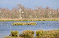 Himmelmoor in Quickborn - auf der 605 Hektar grossen Hochmoorfläche wird teilweise noch Torf abgebaut - auf anderen Teilen des Moors findet eine Renaturierung statt. Blick auf eine wiederbewässerte Anbaufläche vom Himmelmoor - Birken im Hintergrund.