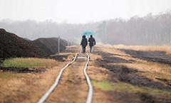 Gleise der Lorenbahn im  Himmelmoor / Quickborn - es findet noch Torfabbau statt; mit 605 Hektar das Größte Hochmoor in Schleswig-Holstein.
